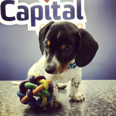CC-puppy